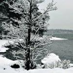Talvi hiipii Uutelaan