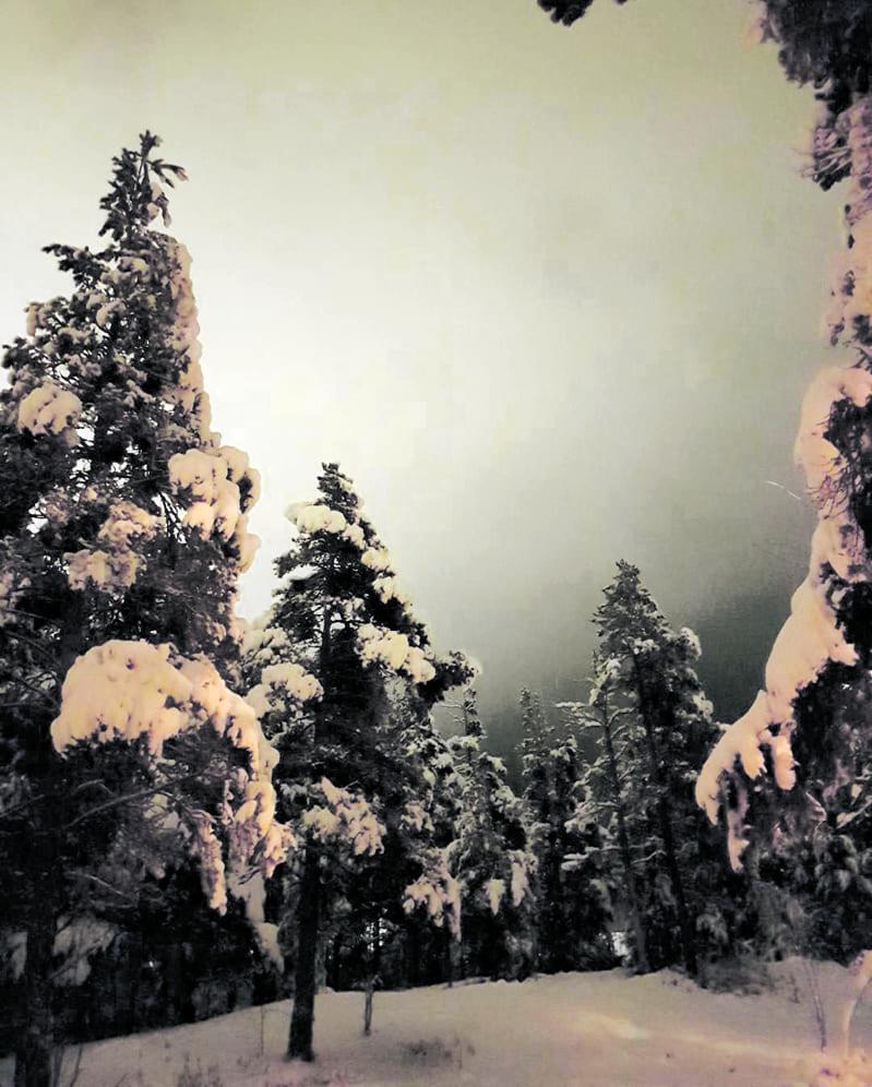 Meri-Rastilan metsää.