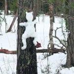 Lumitaidetta metsässä
