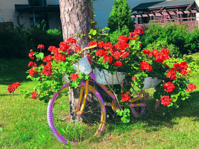 Kukkapyörä.