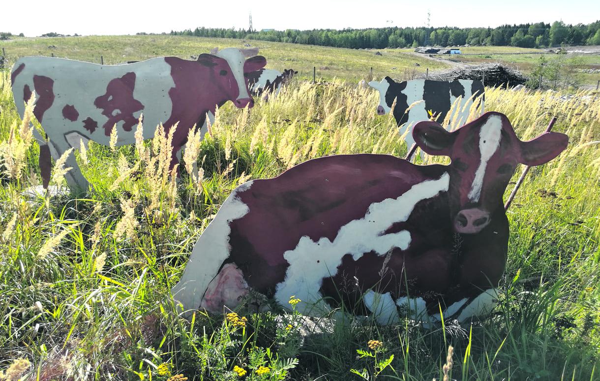 Lehmiä Vuosaarenhuipulla.