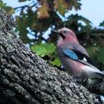 Linnut liikkeellä
