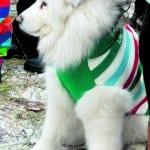 Koirien pukukilpailussa nähtiin tyylikkäitä asuja. Mannekiinit poseerasivat nakkipalkalla.