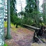 Myrsky kaatoi puita