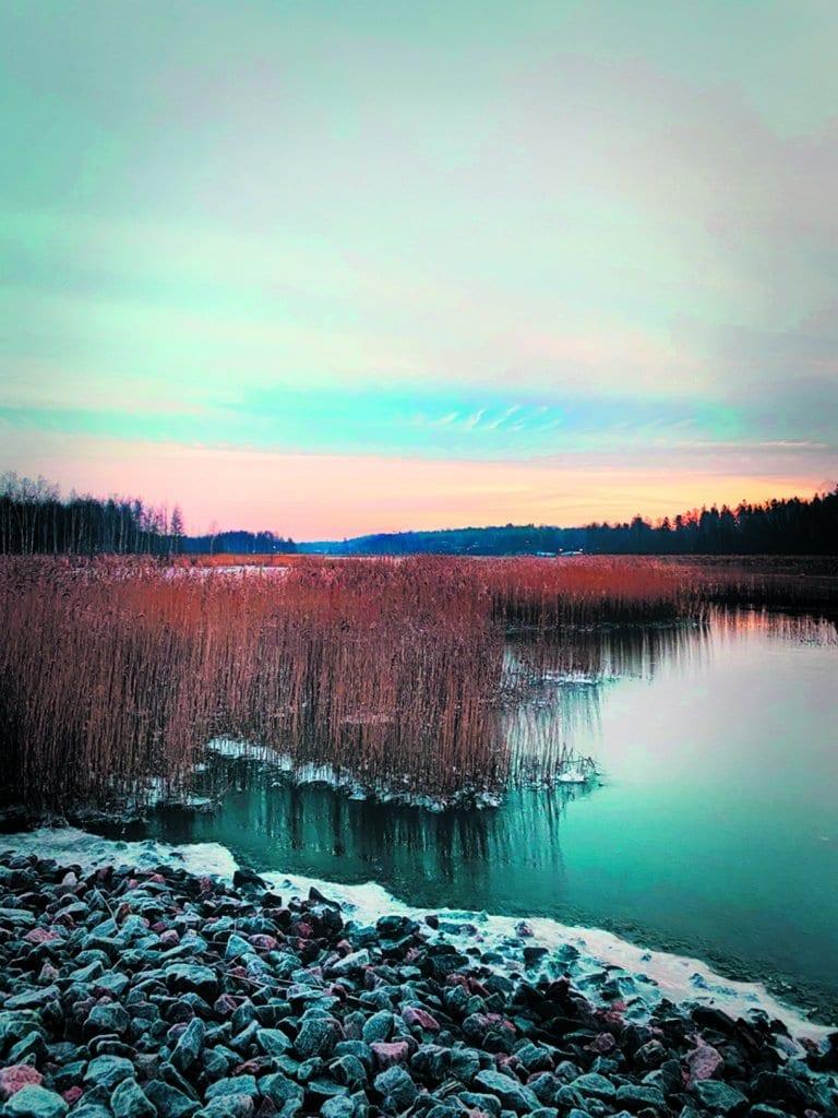 Vartiokylänlahti heräilee tammikuisena aamuna. Kuva: Suvi Lindvall