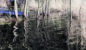 Uutelassa vesi on noussut rantalepikkoon asti. Puiden heijastukset tekevät hienoja kuvia veden pintaan. Kuva: Matti Koivisto