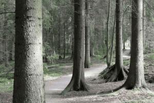 Uutelan metsää vuonna 2017 Kuva: Jan Salonen