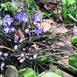 Kevät on saapunut