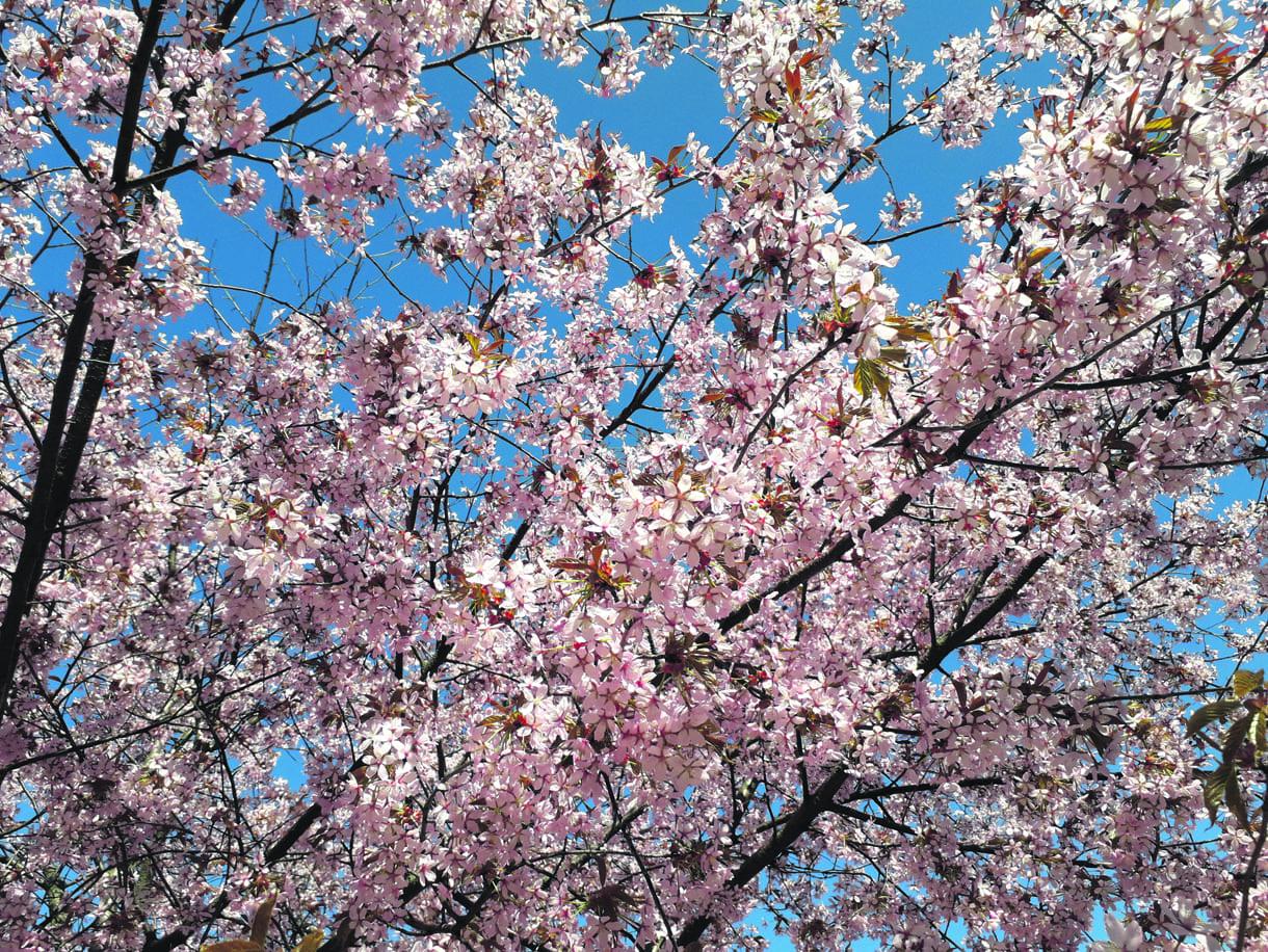Vuosaaren upeaa kukkaloistoa.        Kuva: Kirsi Satosalmi