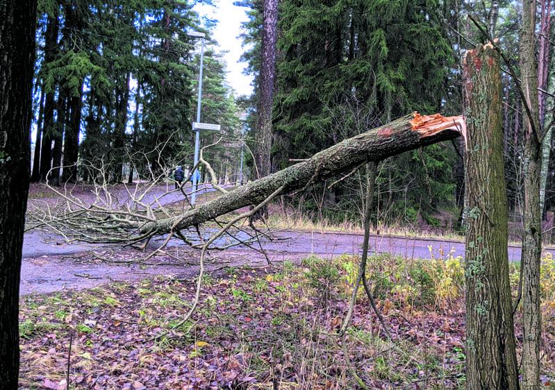 Samoin kävi Vuosaaren puistopolulla urheilukentän lähellä...                 Kuva: Matti Pöhö