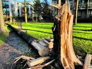 Aurinkolahden Lillkallvikinpuistossa puu kaatui kävelypolulle. Kuva: Satu Toivonen