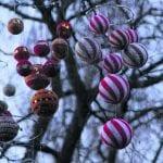 Joulukoivu Sjökullan pihalla