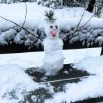Talvi tuli Rastilan metsään!