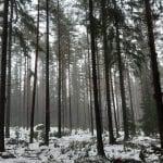 Kaupunki keskeytti puunkaatotyöt Uutelassa