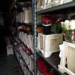 Jättimäärä huumeita kukkien seassa Suomeen