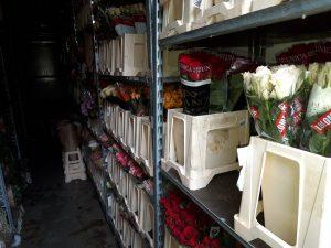 Huumausaineet oli pakattu kuorma-autoon kukkien ja kasvien kuljetusruukkuihin. Kuva: KRP