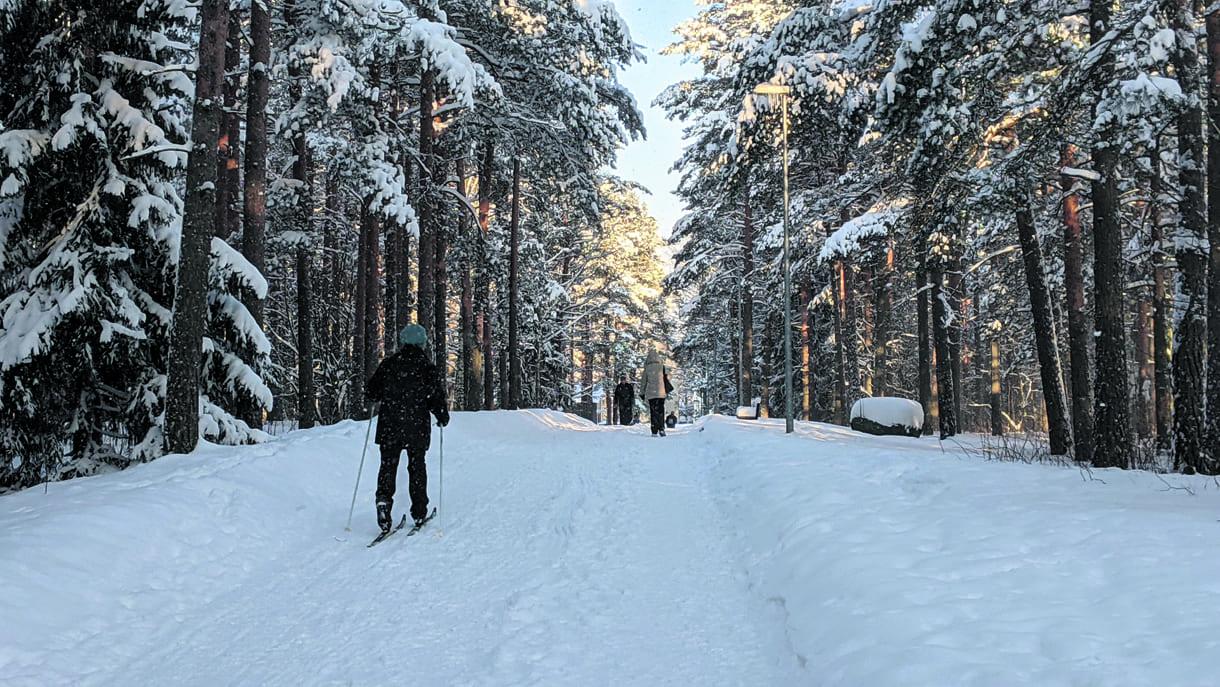 Harvinaista herkkua: suksilla Vuosaaren keskuspuiston puistopolkua pitkin helmikuussa 2021.    Kuva: Matti Pöhö