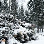 Keskustelu Uutelan metsätöistä kesken – osa töistä jatkuu