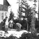 Hiihtoa Kallvikinniemessä pääsiäisenä 1923