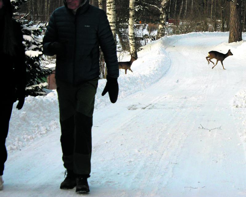 Liikennettä Uutelan Halkullaniemen tiellä. Kuva: Tomi Ahola