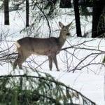 Kohtaaminen metsässä