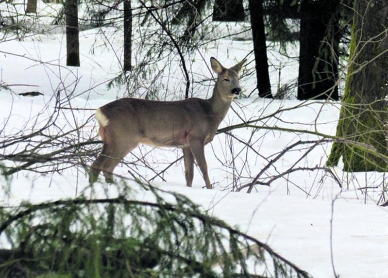 Kohtaaminen Uutelan metsässä 26.2. Kuva: Katri Lehtonen