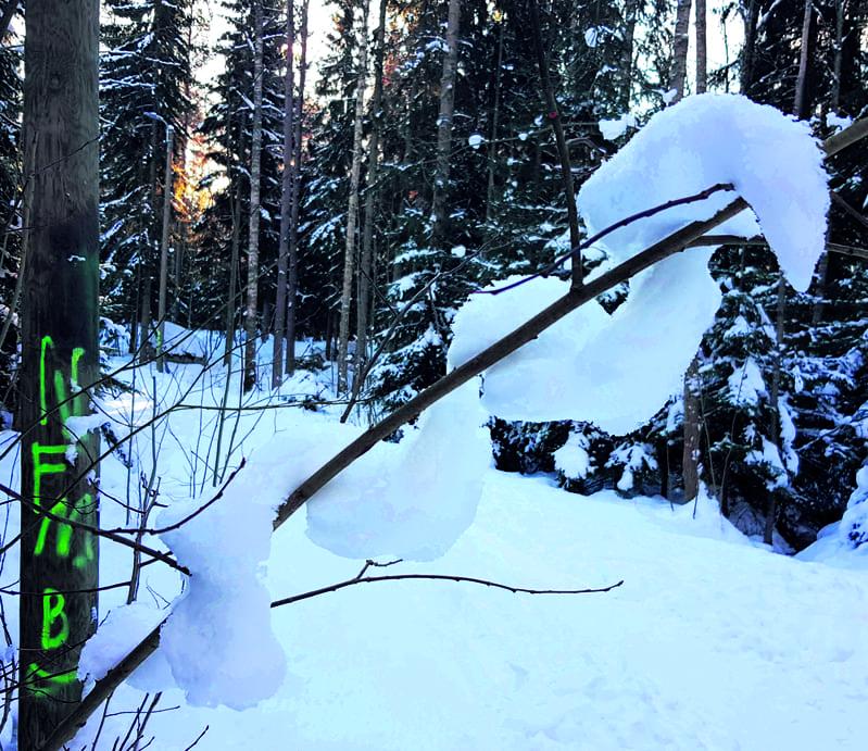 """Tällainen """"lumikäärme"""" kiemurteli lumisessa luonnossa Meri-Rastilan metsässä helmikuun lopulla. T. Senni Mehtonen"""