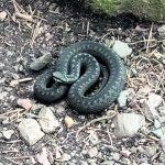 Luonto ja kyykäärme