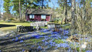17.4. kevättähdet ja Sjökullan piharakennus. Kuva: Matti Pöhö