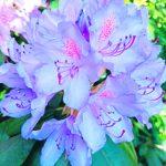 Kukat loistossaan
