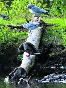 20.8. Kangaslammen asukkaita iltapuuhissa koronavälit huomioon ottaen. Kuva: Mirja Lehtonen