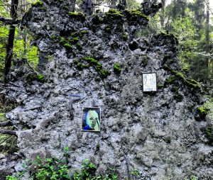 Vuosaaressa metsikössä olevaan puunjuurakkoon on joku ripustanut taidetta. Ohikulkijat kiittävät tuntematonta taiteilijaa! Kuva: Tuija Mod